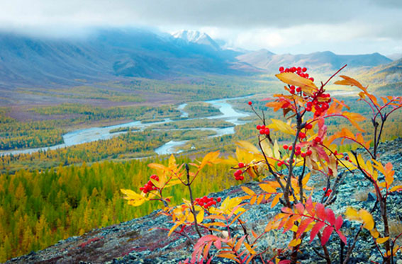 Рябина осенью фото